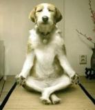 chien yogi2